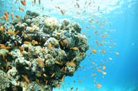 great place for school dive trips